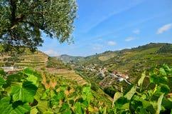 Vale de Douro: Vinhedos e vila pequena perto do peso a Dinamarca Regua, Portugal fotografia de stock royalty free