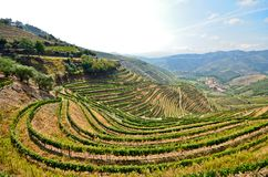 Vale de Douro: Vinhedos perto do rio de Douro em torno de Pinhao, Portugal foto de stock royalty free