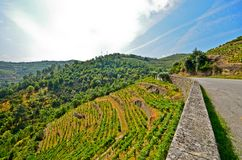 Vale de Douro: Vinhedos perto do rio de Douro em torno de Pinhao, Portugal imagens de stock