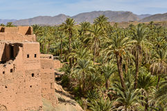 Vale de Draa, plantações da palma, Marrocos fotografia de stock royalty free