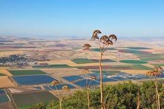 Vale de florescência de Isreel em Israel imagens de stock royalty free