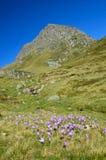 Vale de florescência no outono Atlântico Pyrenees Imagens de Stock