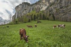 Vale de Lauterbrunnen em Switzerland Imagem de Stock Royalty Free