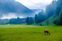 Vale de Logar - Logarska Dolina, Eslovênia Foto de Stock