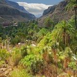 Vale de Los Palmitos Foto de Stock
