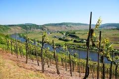 Vale de Moselle perto de Pünderich Imagens de Stock