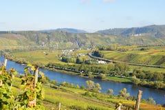Vale de Moselle perto de Pünderich Imagem de Stock Royalty Free