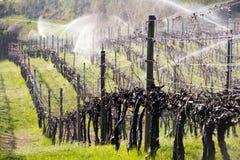 Vale de Okanagan do vinhedo do sistema de extinção de incêndios da irrigação Imagem de Stock Royalty Free