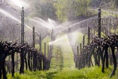 Vale de Okanagan do vinhedo do sistema de extinção de incêndios da irrigação Fotos de Stock