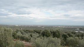 Vale de oliveiras temporais em Fasano Itália filme