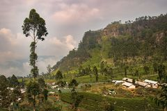 Vale de Sri Lanka Fotografia de Stock