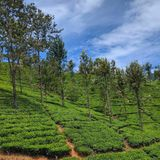Vale de Sri Lanka do sul Imagens de Stock Royalty Free