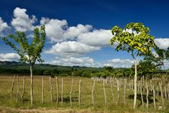Vale de Valle de los Ingenios perto da cidade de Trinidad em Cuba Imagens de Stock