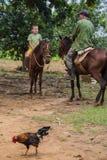 Vale de Vinales, Cuba - 24 de setembro de 2015: Coutrysi cubano local Imagem de Stock
