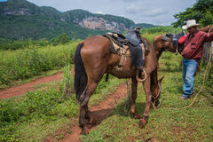 Vale de Vinales, Cuba - 24 de setembro de 2015: O vaqueiro local prepara-se Fotografia de Stock Royalty Free