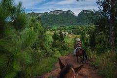 Vale de Vinales, Cuba - 24 de setembro de 2015: Riddin local dos vaqueiros Fotografia de Stock