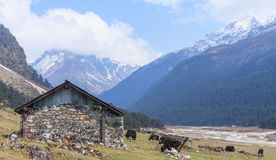 Vale de Yumthang, Sikkim norte, Índia Imagem de Stock