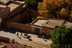 Vale de Ziz, Moroco - 3 de dezembro de 2018: Transporte do asno fotografia de stock royalty free