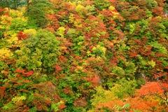 Vale do desfiladeiro de Naruko com as folhas de outono coloridas fotos de stock