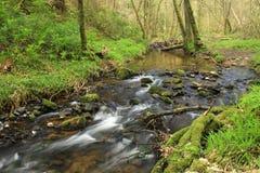 Vale feericamente, Rosemarkie, montanhas de Scotland Imagens de Stock Royalty Free