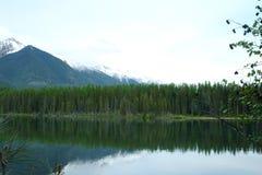 Vale Holland Lake da cisne de Seeley fotografia de stock royalty free
