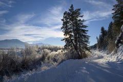 Vale Idaho da cisne Imagens de Stock Royalty Free