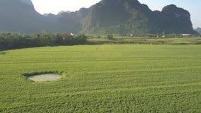 Vale ilimitado coberto com o campo verde contra a floresta filme
