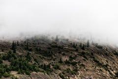 Vale nevoento da montanha da floresta do pinho com crescimento fresco da mola foto de stock