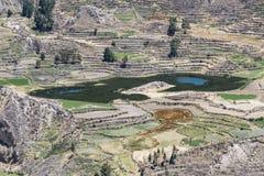 Vale Terraced no Peru imagem de stock royalty free