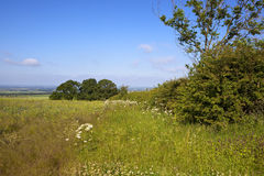 Vale of york in summer. A view of the vale of york from a meadow with wildflowers trees and hedgerows under a blue summer sky in the yorkshire wolds Royalty Free Stock Photography