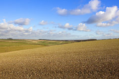 Vale of york vista. Cultivated hillside field with a view of the vale of york in a yorkshire wolds landscape under a blue sky with fluffy clouds in autumn Royalty Free Stock Images