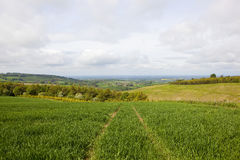Vale of york and woodland. Vale of york scenery from a hillside wheat field with mixed woodland and meadows under a blue cloudy sky in summer Stock Images