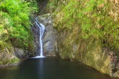 Valea lui斯坦峡谷在罗马尼亚 免版税库存图片