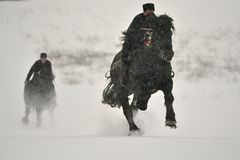 Valea Seaca, Covasna, Rumunia, Luty 24, 2018: Jechać konia podczas gdy na zewnątrz snowing dużo Zdjęcia Royalty Free