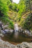 Valealui Stan Gorge in Roemenië Stock Fotografie