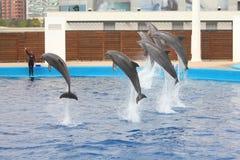 Valencia aquarium Stock Photo