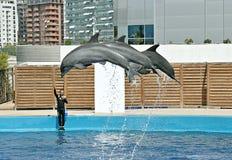 Valencia Aquarium Stock Image