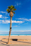 Valencia  beach palm trees in Patacona Royalty Free Stock Images