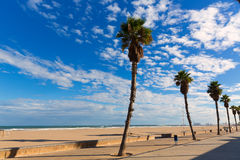 Valencia  beach palm trees in Patacona Stock Photos