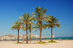 Valencia, Cullera palms beach Royalty Free Stock Images