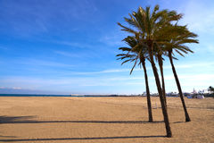 Valencia La Malvarrosa beach arenas Spain. Valencia La Malvarrosa beach arenas palm trees in Spain Royalty Free Stock Photography