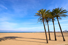 Valencia La Malvarrosa beach arenas Spain. Valencia La Malvarrosa beach arenas palm trees in Spain Royalty Free Stock Image