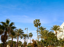 Valencia La Malvarrosa beach arenas Spain. Valencia La Malvarrosa beach arenas palm trees in Spain Royalty Free Stock Photos