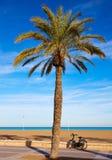 Valencia La Malvarrosa beach palm trees Spain Stock Image