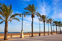 Valencia La Malvarrosa beach palm trees Spain. Valencia La Malvarrosa beach palm trees promenade in Spain Royalty Free Stock Image