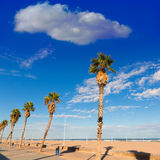 Valencia Malvarrosa Las Arenas beach palm trees Stock Images