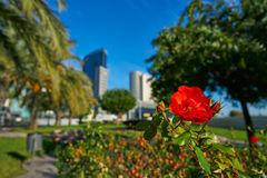Valencia modern town skyline from the park Royalty Free Stock Photography