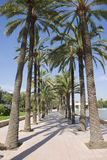 Valencia palm trees. Alley with palm trees in valencia royalty free stock image
