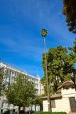 Valencia Parterre park high palm tree Spain Stock Photos