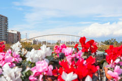Valencia puente de Exposicion from city flowers bridge Royalty Free Stock Image